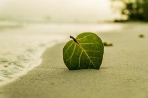 beach-394503_640